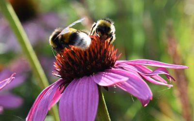 Loft Bumblebees Newbury