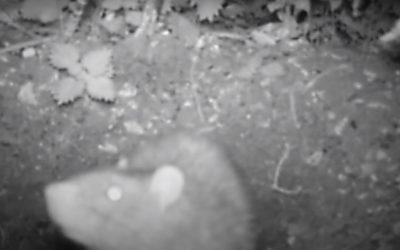 Rat Control On the Farm in Newbury