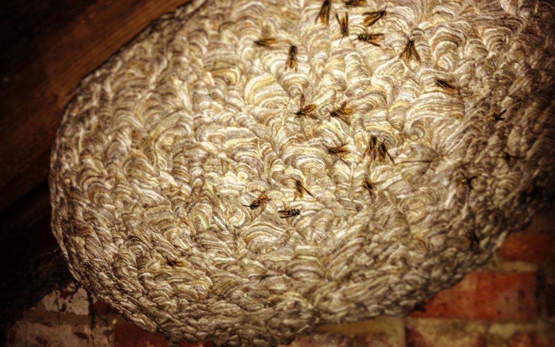 Favourite Wasps Nests of 2018