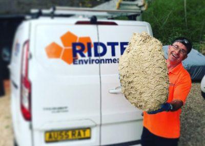 huge wasp nest in front of van