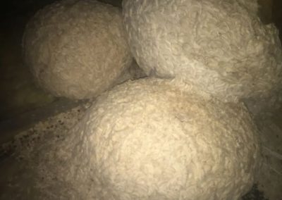 three large wasps nest in attic
